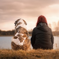 WHY YOU SHOULD CONSIDER GETTING YOU A PET